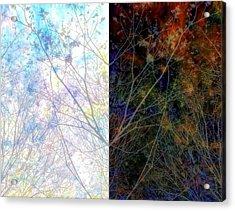 Irresistible Duplication Acrylic Print