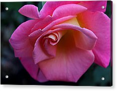 Acrylic Print featuring the photograph Irresistible by Michiale Schneider