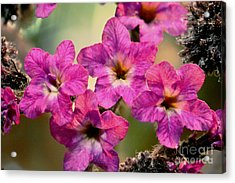 Irridescent Pink Flowers Acrylic Print by Ryan Kelly