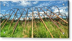 Irrigation Pipes 1 Acrylic Print by Jerry Sodorff