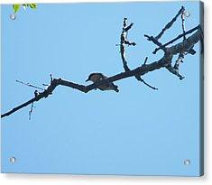 Is A Bird Acrylic Print by Nereida Slesarchik Cedeno Wilcoxon