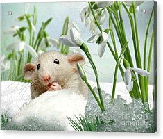 Is It Spring Yet ? Acrylic Print by Morag Bates