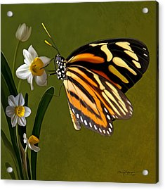 Isabella Tiger Butterfly Acrylic Print