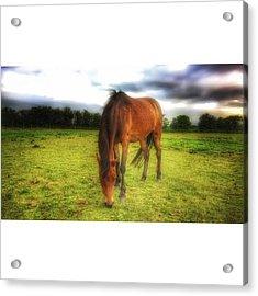 Isabellashores.com #horse #equine Acrylic Print