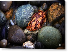 Isakro One Acrylic Print by Julius Reque