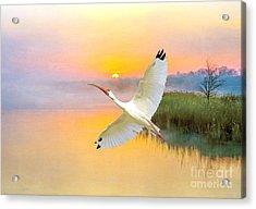 Island Ibis Acrylic Print