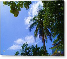 Island Palm Acrylic Print