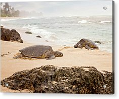 Acrylic Print featuring the photograph Island Rest by Heather Applegate