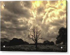 Isolated Acrylic Print by Martin Newman