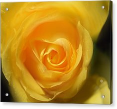 Acrylic Print featuring the photograph It Is At The Edge Of The Petal That Love Waits by Douglas MooreZart