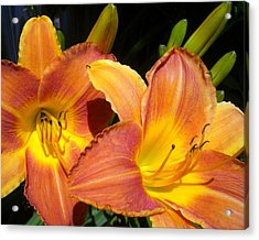 It Is So True Lily Acrylic Print by Cynthia Daniel