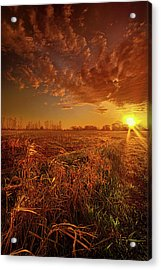 It Just Is Acrylic Print by Phil Koch