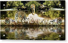 Acrylic Print featuring the photograph It Must Be Time For A Tiger Nap by Diane Schuster