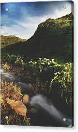 It Was A Hard Winter Acrylic Print by Laurie Search