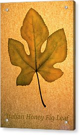 Acrylic Print featuring the photograph Italian Honey Fig Leaf 4 by Frank Wilson