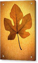 Acrylic Print featuring the photograph Italian Honey Fig Leaf by Frank Wilson