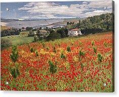 Italian Poppy Field Acrylic Print