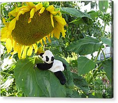Acrylic Print featuring the photograph It's A Big Sunflower by Ausra Huntington nee Paulauskaite