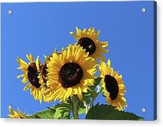 It's A Blue Sky Day Acrylic Print