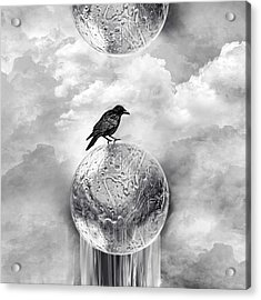 It's A Crow's World Acrylic Print