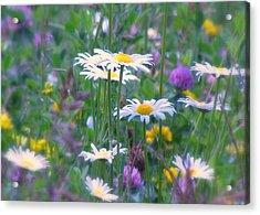 It's A Daisy Kind Of Day Acrylic Print