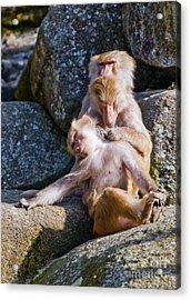 Its A Hard Life Acrylic Print by Andrew  Michael