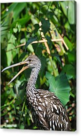 It's A Jungle Out There Acrylic Print by Rose  Hill