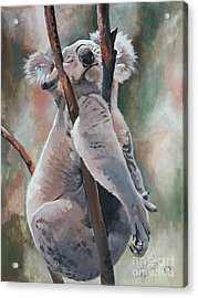 Its About Trust - Koala Bear Acrylic Print by Suzanne Schaefer