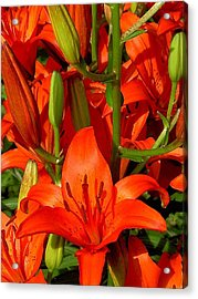 It's All About Red Acrylic Print