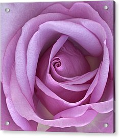 It's All About The Inner Beauty 2 Acrylic Print