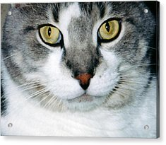 It's In The Cat Eyes Acrylic Print