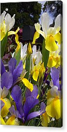 It's Not A Bud In The Middle Acrylic Print by Gail Salitui