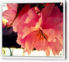 It's So Pink Acrylic Print by Jhoy E Meade