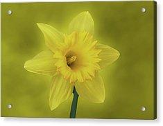 It's Spring Acrylic Print by Sandy Keeton