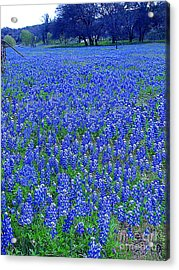 It's Spring - Texas Bluebonnets Time Acrylic Print