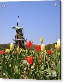 Its Tulip Time Acrylic Print by Robert Pearson