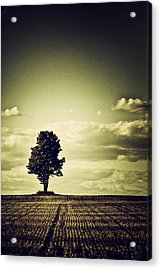 I've Been Watching...and...waiting.... Acrylic Print