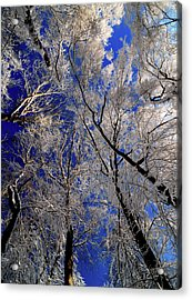 I've Heard Thee Acrylic Print by JCYoung MacroXscape