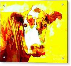 Yellow Cow Acrylic Print