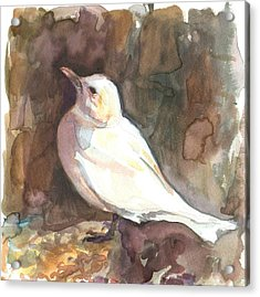 Ivory Gull Acrylic Print