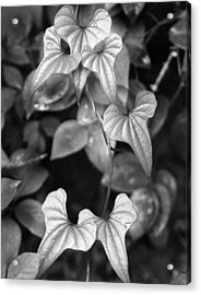 ivy Acrylic Print by Curtis J Neeley Jr