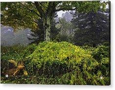 Ivy Garden Acrylic Print