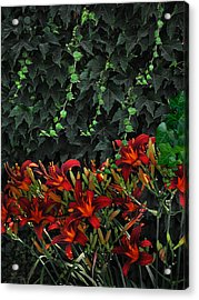 Ivy Over Acrylic Print by Richard Gordon