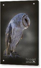 Ivy The Barn Owl Acrylic Print