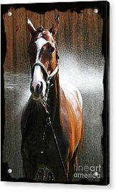 Acrylic Print featuring the photograph Ivys Shower by Deborah Johnson