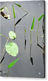 Acrylic Print featuring the photograph Izzy's Pond Close Up by AnnaJanessa PhotoArt