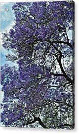 Jacaranda Clouds Acrylic Print by Gwyn Newcombe