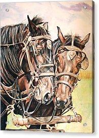 Jack And Joe Hard Workin Horses Acrylic Print by Toni Grote