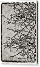 Jack Frost Acrylic Print by Bill Cannon