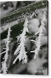 Jack Frost Was Here Acrylic Print